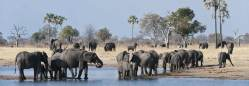Herds of elephants, all to yourself